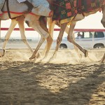 Camel-racing-in-the-UAE-Abu-Dhabi-02